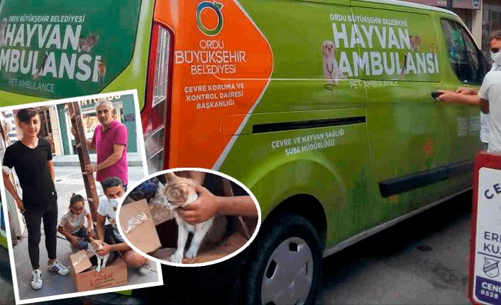 Kediyi hayvan ambulansı kurtardı