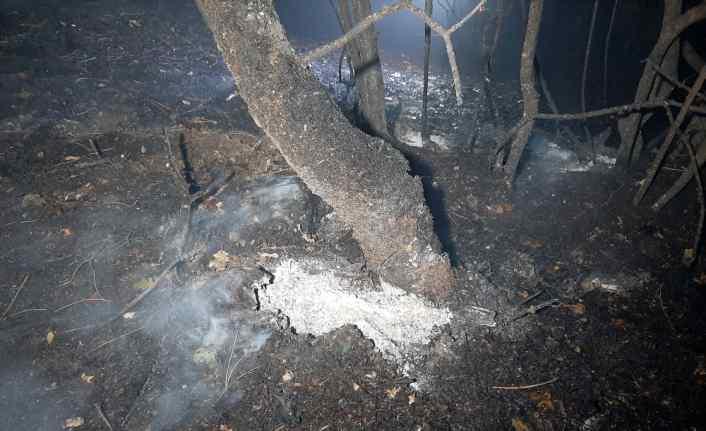 Karabük'te çıkan orman yangını söndürüldü