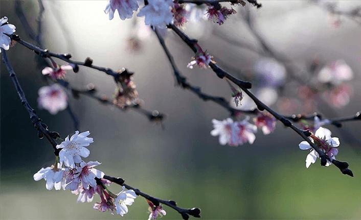 Baharın müjdesi cemre havaya düştü