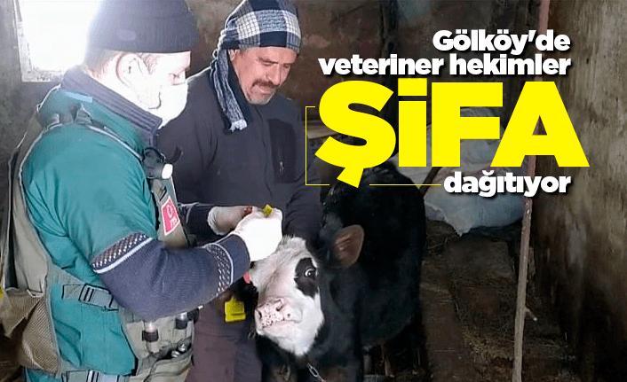 Gölköy'de veteriner hekimler şifa dağıtıyor