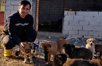 Felçli köpek hayata böyle bağlandı