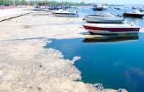 Marmara Denizi salya ile kaplandı