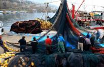 Karadenizli balıkçılar ağ toplamaya başladı