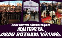 Maltepe'de Ordu rüzgarı!