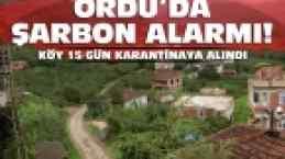 ORDU'DA ŞARBON ALARMI VERİLDİ! 1 KİŞİ ÖLDÜ...