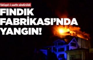 Fındık fabrikasında yangın