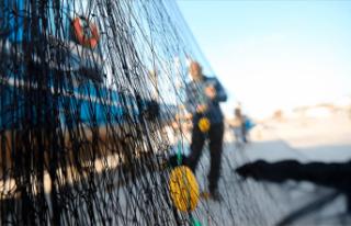 Kısmi hamsi avı yasağı 7 Şubat'ta bitiyor