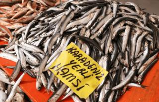 """Karadenizli balıkçılar sezonu """"kötü""""..."""