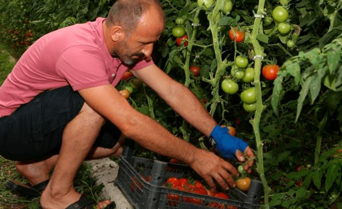 Başkan Güler'in projesi ilk meyvesini verdi