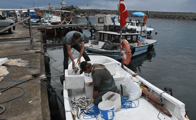 Orta Karadeniz'de umutlar palamutta