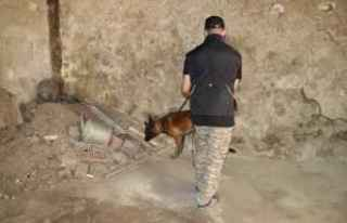 """Bolu'da narkotik köpekleri """"Sezar"""" ve """"Artos""""..."""