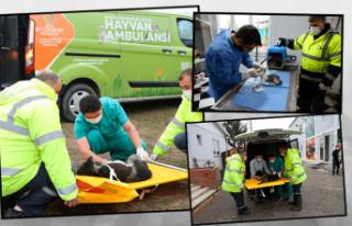 Hayvan ambulansı can dostlara can kattı