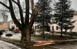 TBMM'deki bir ağaca yıldırım düştü