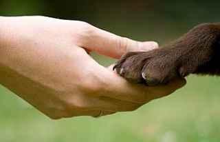 Hayvanları koruma kanunu resmileşti