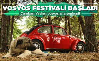 Hayden Vosvos Festivali'ne!