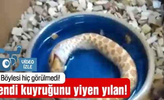 Yılan kendi kuyruğunu yedi!