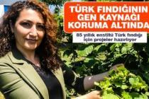 Türk fındığının gen kaynağı koruma altında