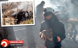 4 köpek yavrusu alevlerden kurtarıldı