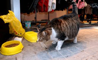 Soğukta üşüyen kedilere mağazanın kapılarını açtılar