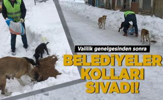 Büyükşehir sokak hayvanlarına el uzattı!
